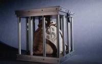 Рада хочет ввести автоматический арест средств должников