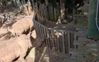 В зоопарке Флориды носорог напал на двухлетнюю девочку