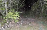В Херсонской области тело судьи нашли закопанным в лесопосадке