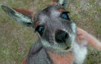 По автострадам Британии прыгают кенгуру