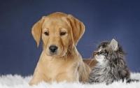 Кошки и собаки в доме снижают риск аллергии у детей