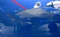 Чуть не случилась авиакатастрофа в Борисполе из-за тумана