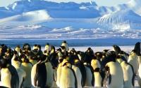 Пингвины попали в