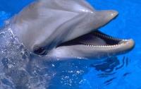 Донецких дельфинов эвакуировали в Харьков