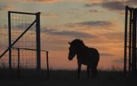 На Волыни три удара молнии настигли коня и подводу мужчины с сыном