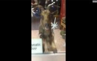 Агрессивный козел взял в заложники работников магазина (ВИДЕО)