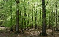Леса Украины могут огородить сетками - для избранных