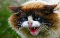 В Днепровском районе Киева ввели карантин из-за бешеной кошки