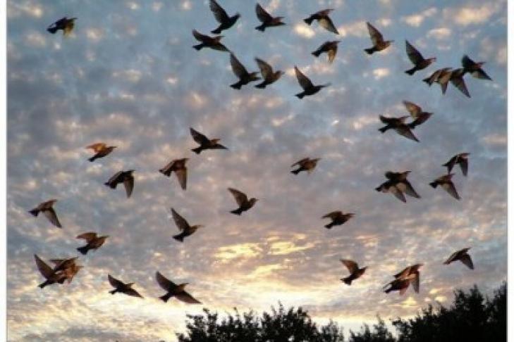 Ученые объявили вымершими 13 видов птиц
