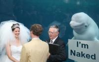 Белый кит испортил свадебное фото