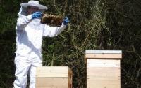 Необычное преступление: в Британии украли 24 тысячи пчел