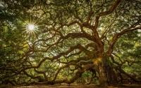 Ученые выявили у деревьев интересную особенность