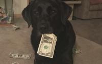 Минфин США вернул мужчине $500, которые якобы съела собака