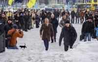 Дорогу Гриценко в ЦИК перебежала черная кошка (фотофакт)