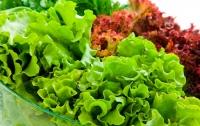 Вредного паразита обнаружили в импортном салате