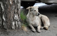 Бродячая собака спасла женщину от грабителя (видео)
