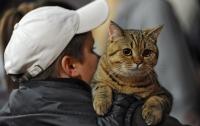 В Киев съехались лучшие коты и кошки со всего мира