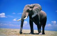 Слон атаковал туристку, которая подошла к животному слишком близко (Видео)