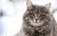Как коты влияют на психическое здоровье хозяев