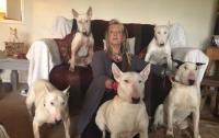 Британка променяла мужа, с которым прожила 25 лет, на 30 собак
