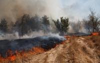 Украинцев предупредили о самом высоком уровне пожарной опасности