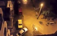 По вулицях Тбілісі бродять леви, тигри і крокодили (ФОТО)