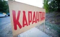 В одном из районов Киева введен карантин из-за бешенства