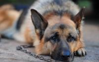 Харьковчанин заказал жестокое убийство своей овчарки