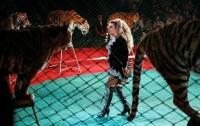 Португалия запретила выступления диких животных в цирках
