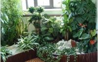 ТОП-5 самых полезных для здоровья комнатных растений