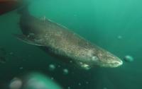 Заплыв туристов с самой крупной в мире акулой попал на видео
