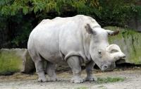Последний в мире белый носорог завел профиль в Tinder