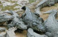 Девушка прыгнула в яму с крокодилами из-за денег