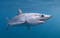 Рыбак голыми руками отстоял свой улов у акул