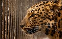 Леопард напал на двухлетнего ребенка в зоопарке