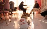 Собаки, которых не съели корейцы, работают у китайцев (видео)