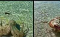 В Австралии разъяренный осьминог набросился на мужчину (видео)