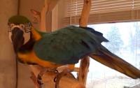 От зловещего смеха попугая в жилах стынет кровь (ВИДЕО)
