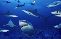 Рыбаки ежегодно убивают 100 миллионов акул, - ученые