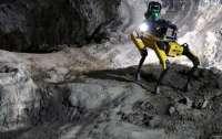 Собаки-марсиане NASA начнут изучение Красной планеты