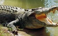 Женщина отбила сына у крокодила