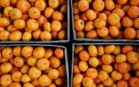 Врачи назвали безопасное для здоровья количество мандаринов