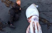 Найденный на берегу огромный кальмар оказался вдвое больше человека