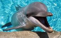 Дельфины обращаются друг к другу по имени