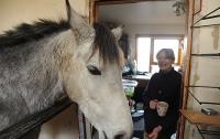 Пенсионерка поселила у себя дома лошадь