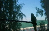 В Харькове попугай едва не погубил хозяина
