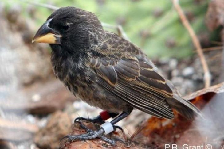 Биологи проследили за возникновением нового вида птиц