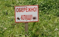 Жителей Киева стали атаковать инфицированные клещи