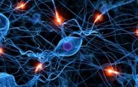 Стало известно, какие продукты восстанавливают нервную систему
