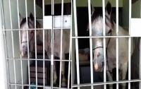 В Бразилии лошадь посадили в тюрьму (видео)
